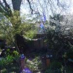 My garden feb 2008 (2)